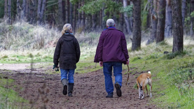 An elderly couple walk their dog in the woods